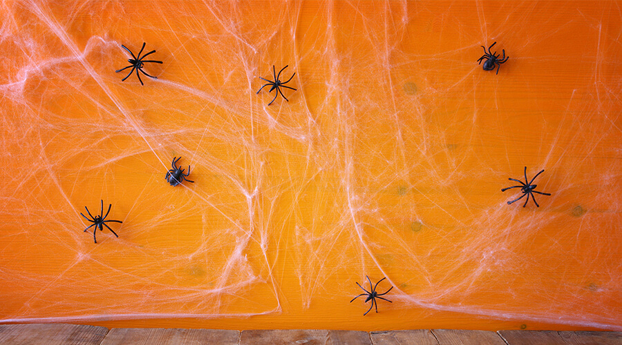 halloween cobwebs and spiders